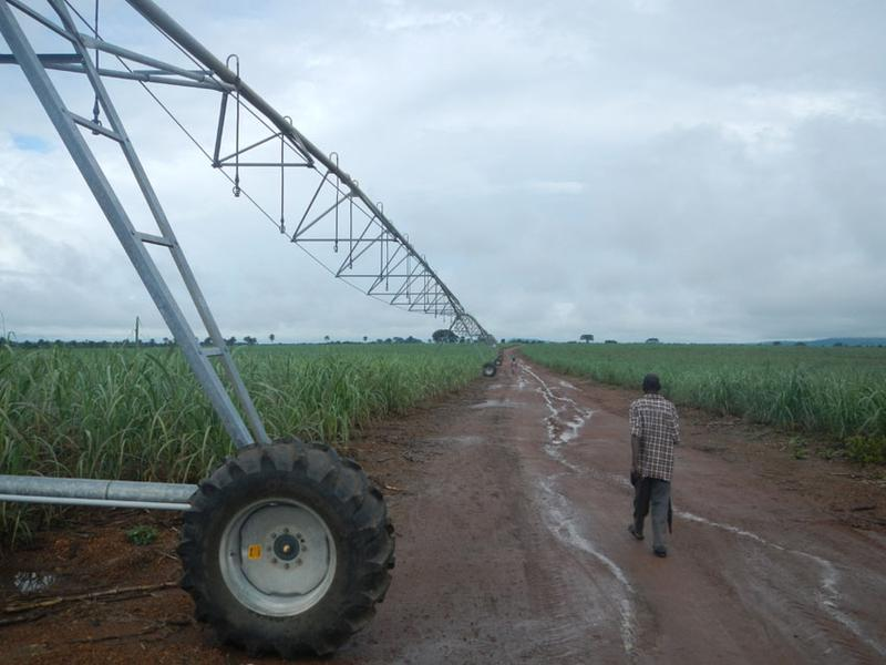 Sugarcane plantation of Addax Bioenergy in Sierra Leone for biofuel production (picture by Fabian Käser)